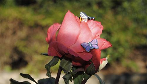 gemelli-farfalle-mon-art